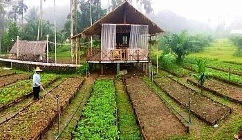 Có phải khôi phục lại tình trạng ban đầu khi tự ý chuyển mục đích sử dụng đất