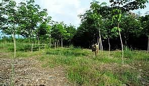 Đất rừng phòng hộ được chuyển mục đích sử dụng đất sang đất ở không?